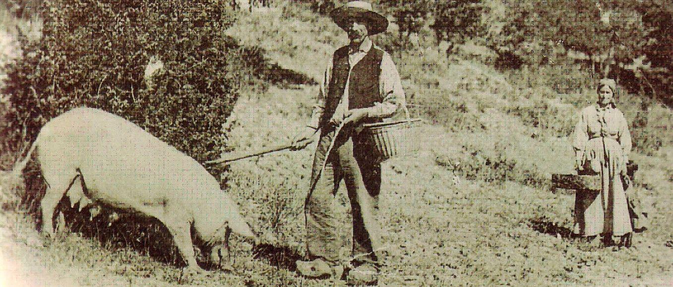 historia de la trufa